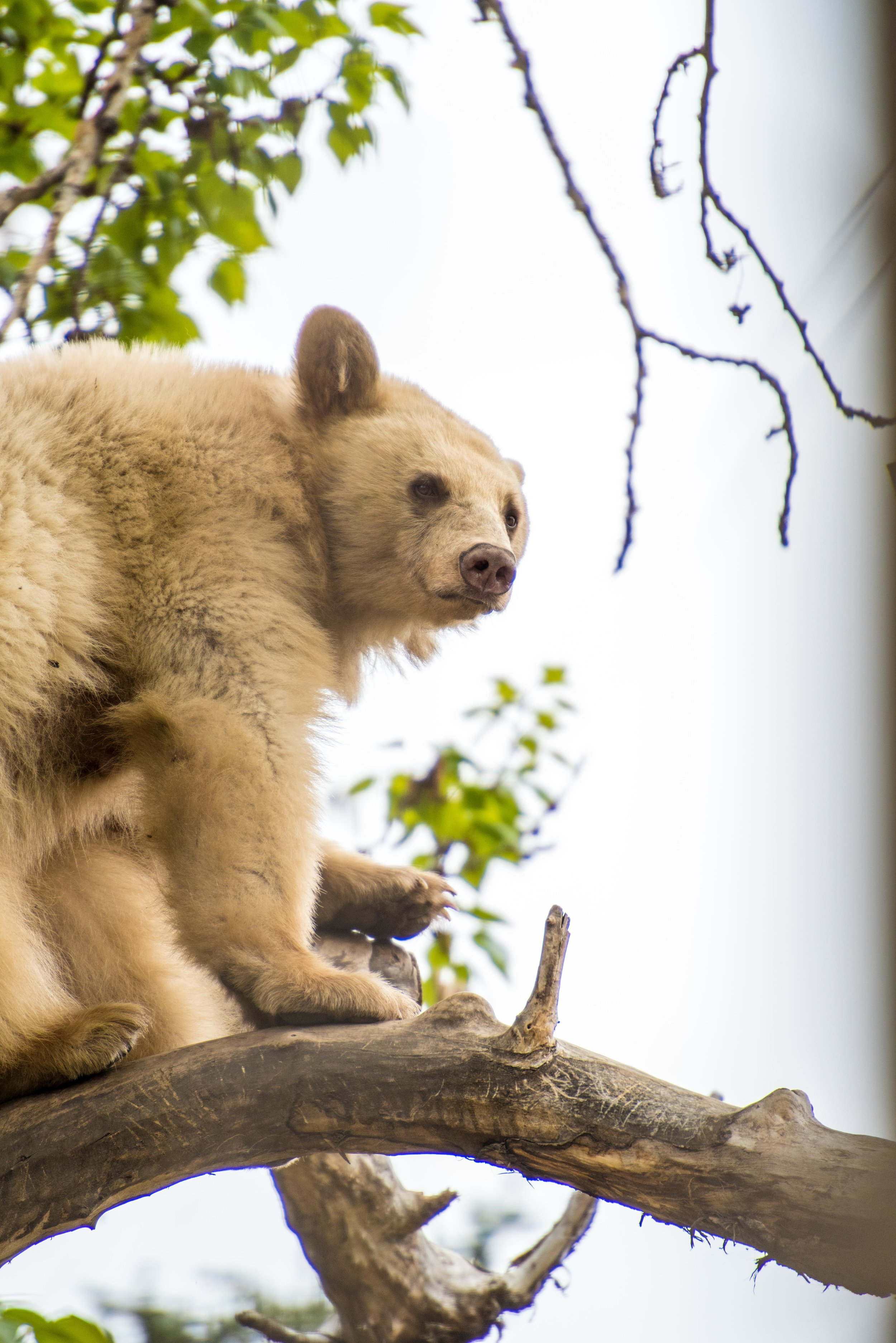 calgary zoo-3544.jpg