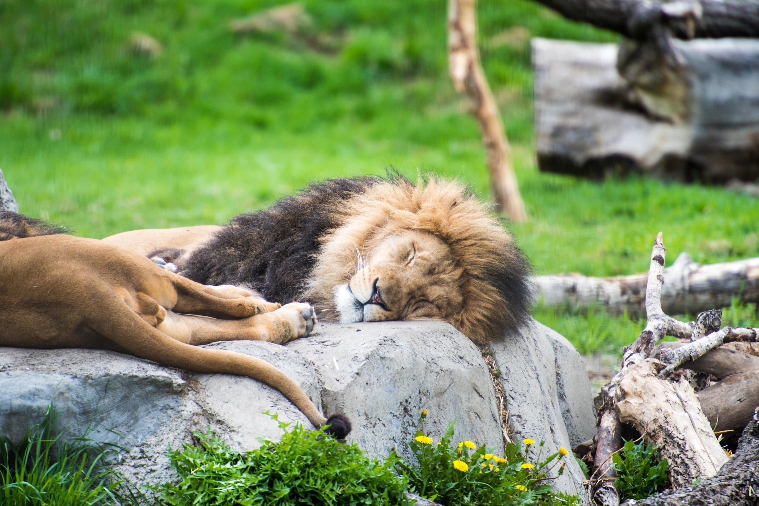 calgary zoo-3630.jpg