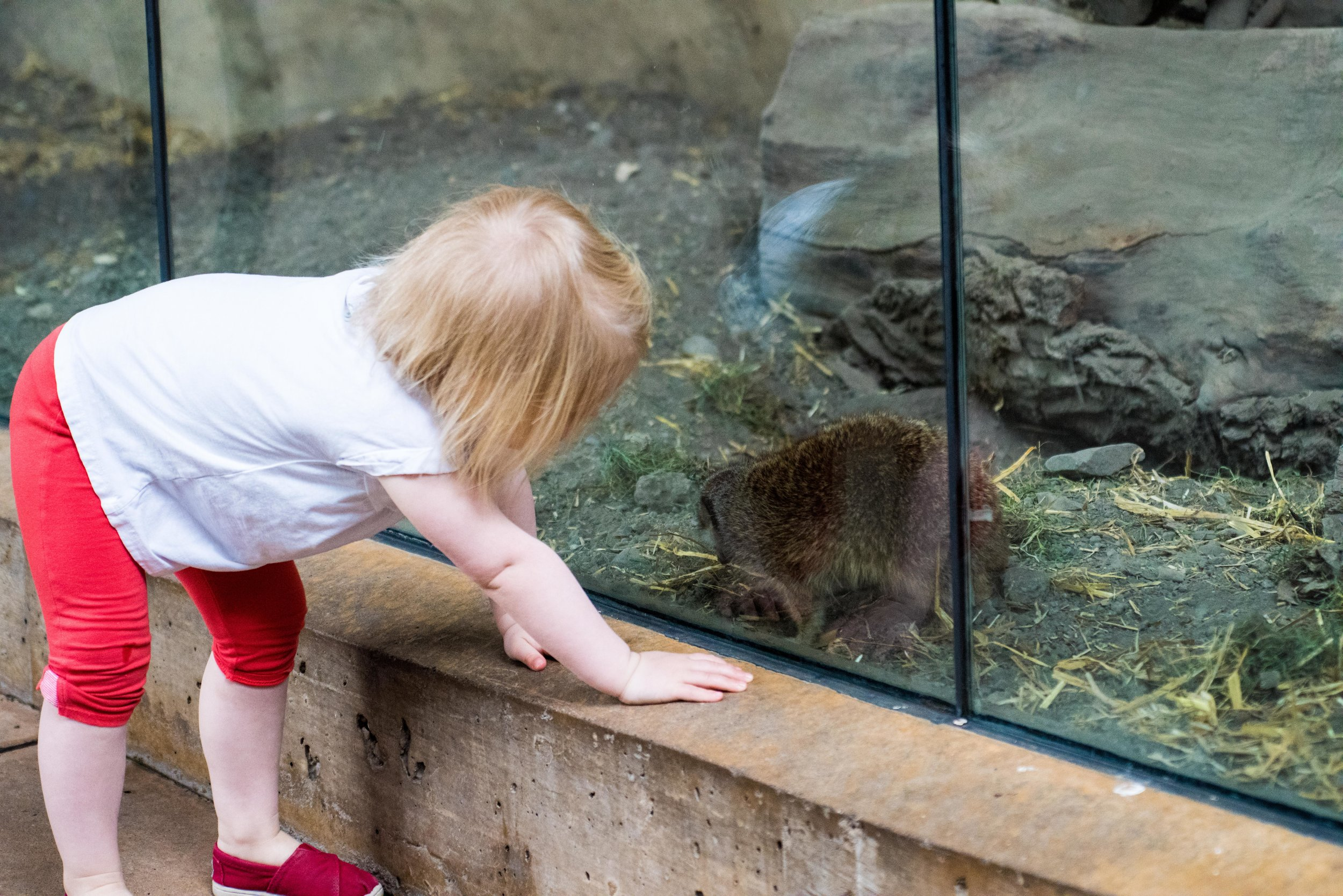 calgary zoo-3568.jpg