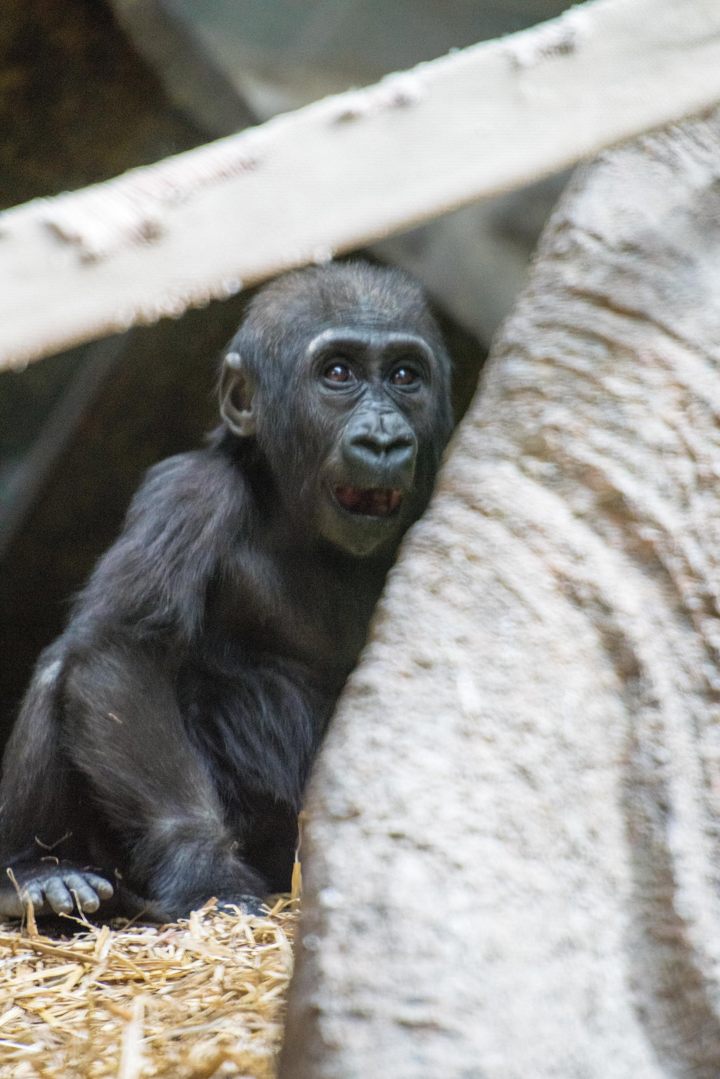 calgary zoo-3692.jpg