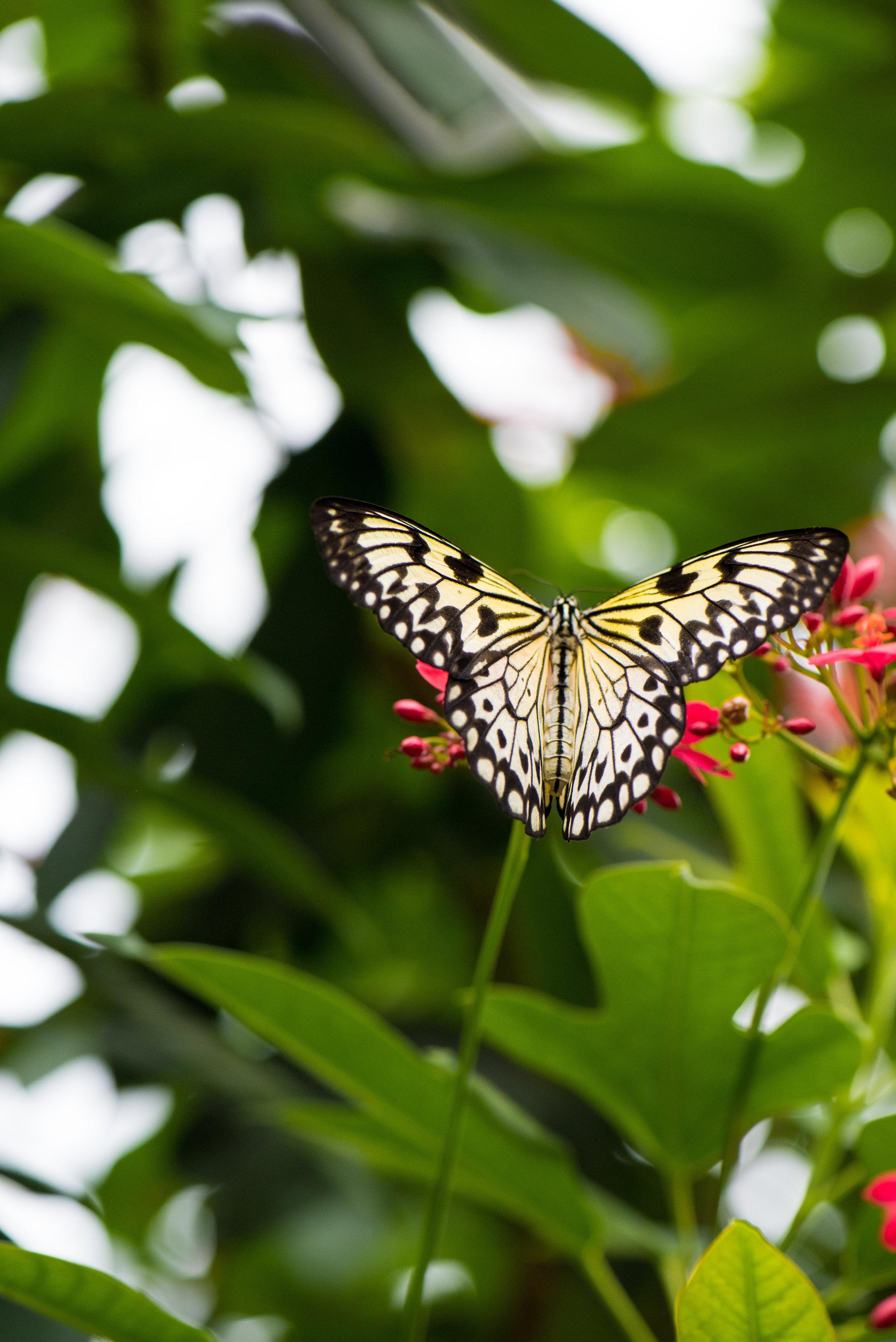 calgary zoo-3724.jpg