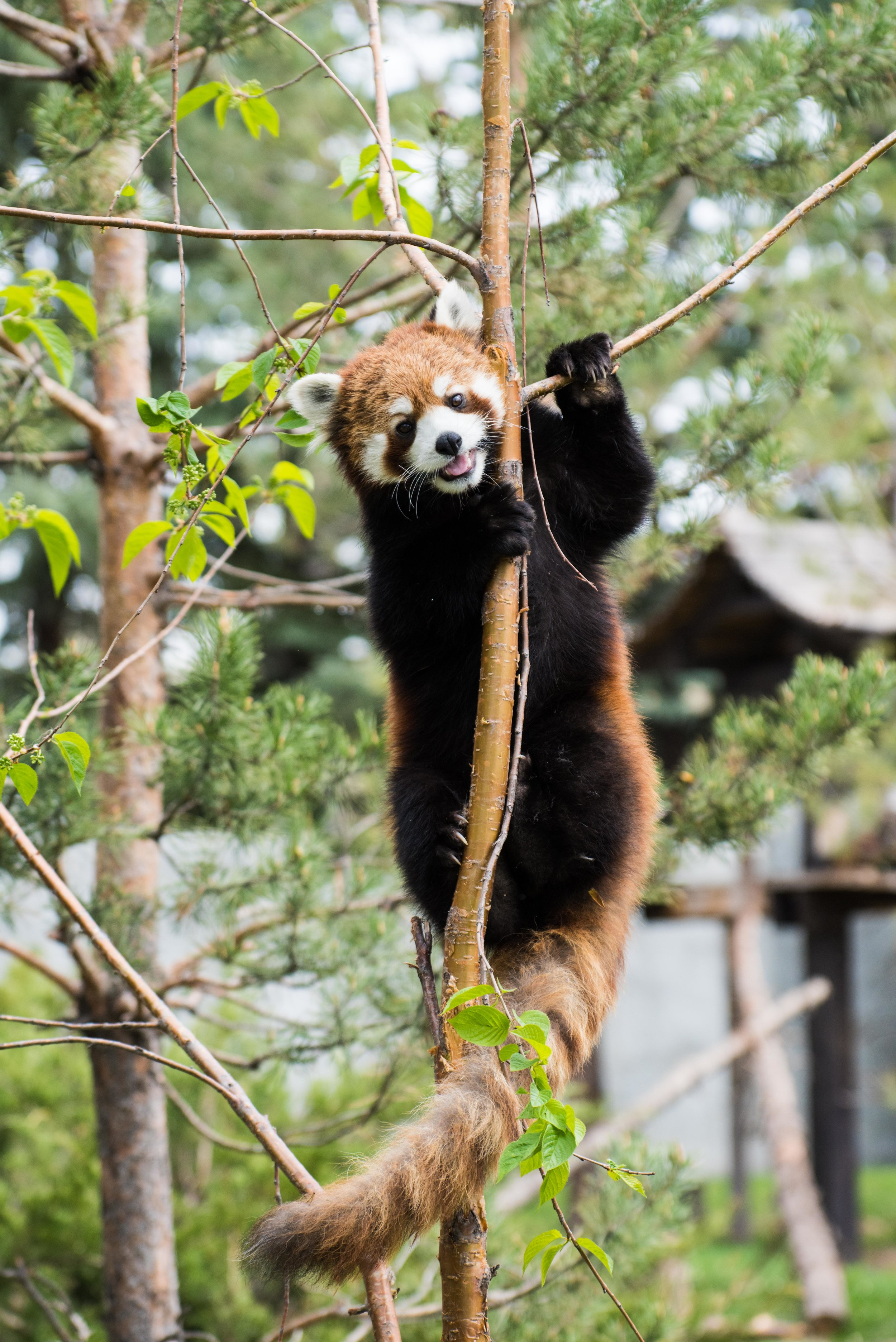 calgary zoo-3749.jpg