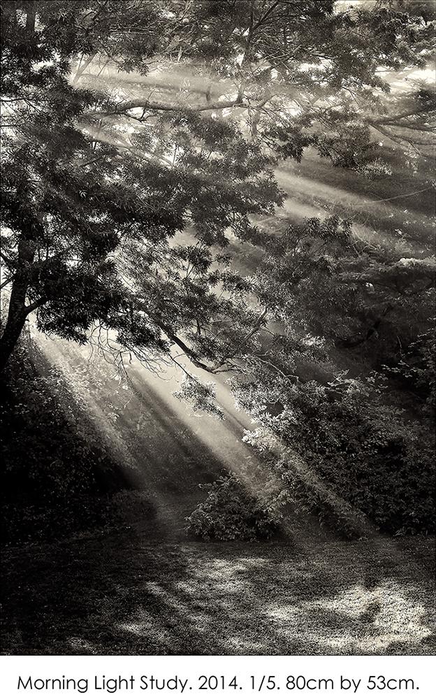 Morning Light Study.jpg