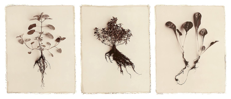 3-herbs.jpg