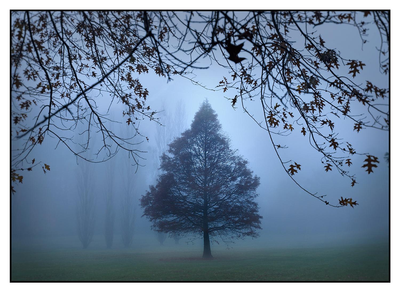 Moss-Vale-Park.jpg
