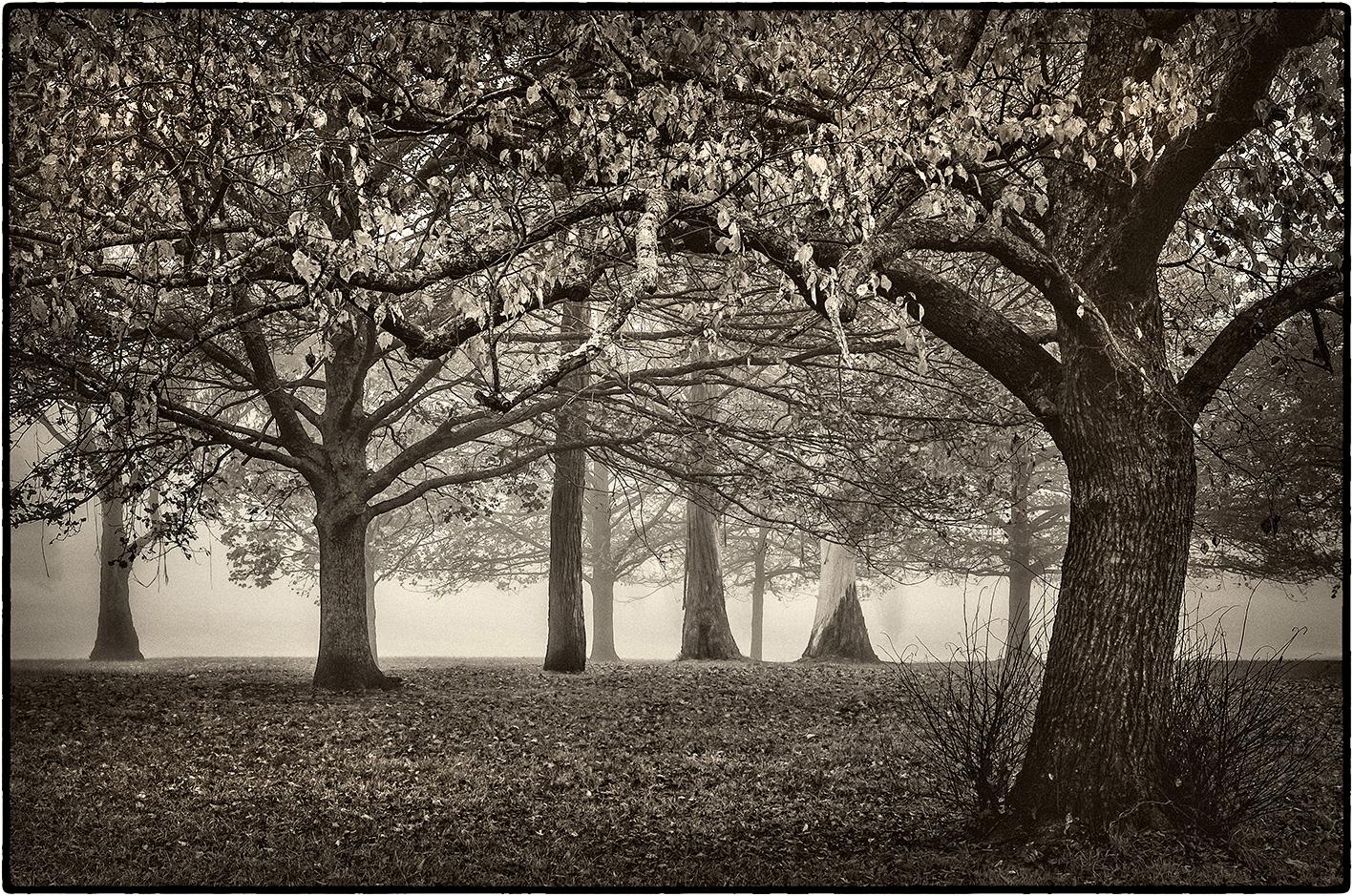 seymour-park-1.jpg