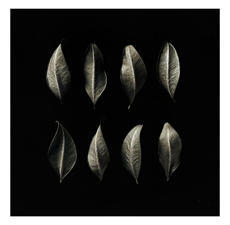Buxus-Leaves.jpg