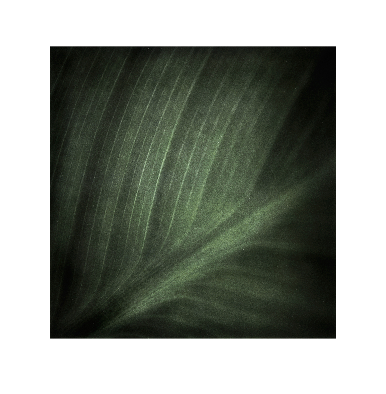 Garden-of-Secrets-No.15.jpg