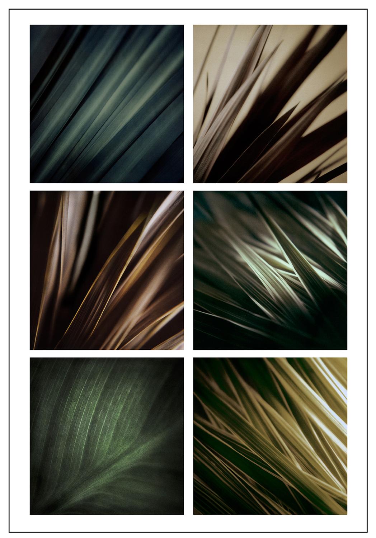 Plant-study.jpg