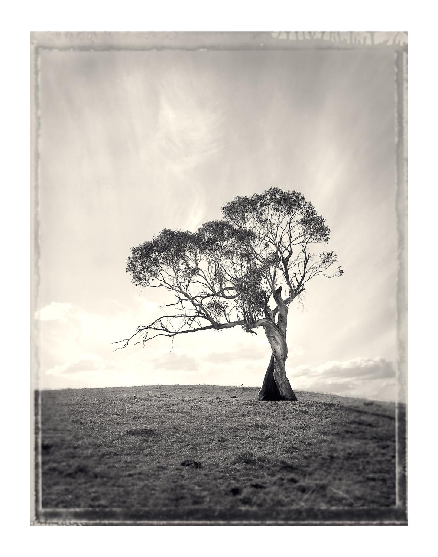 sutton-forest-tree.jpg