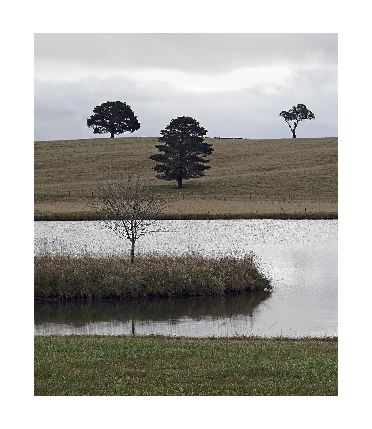 Tree-Arangement-No.1.jpg