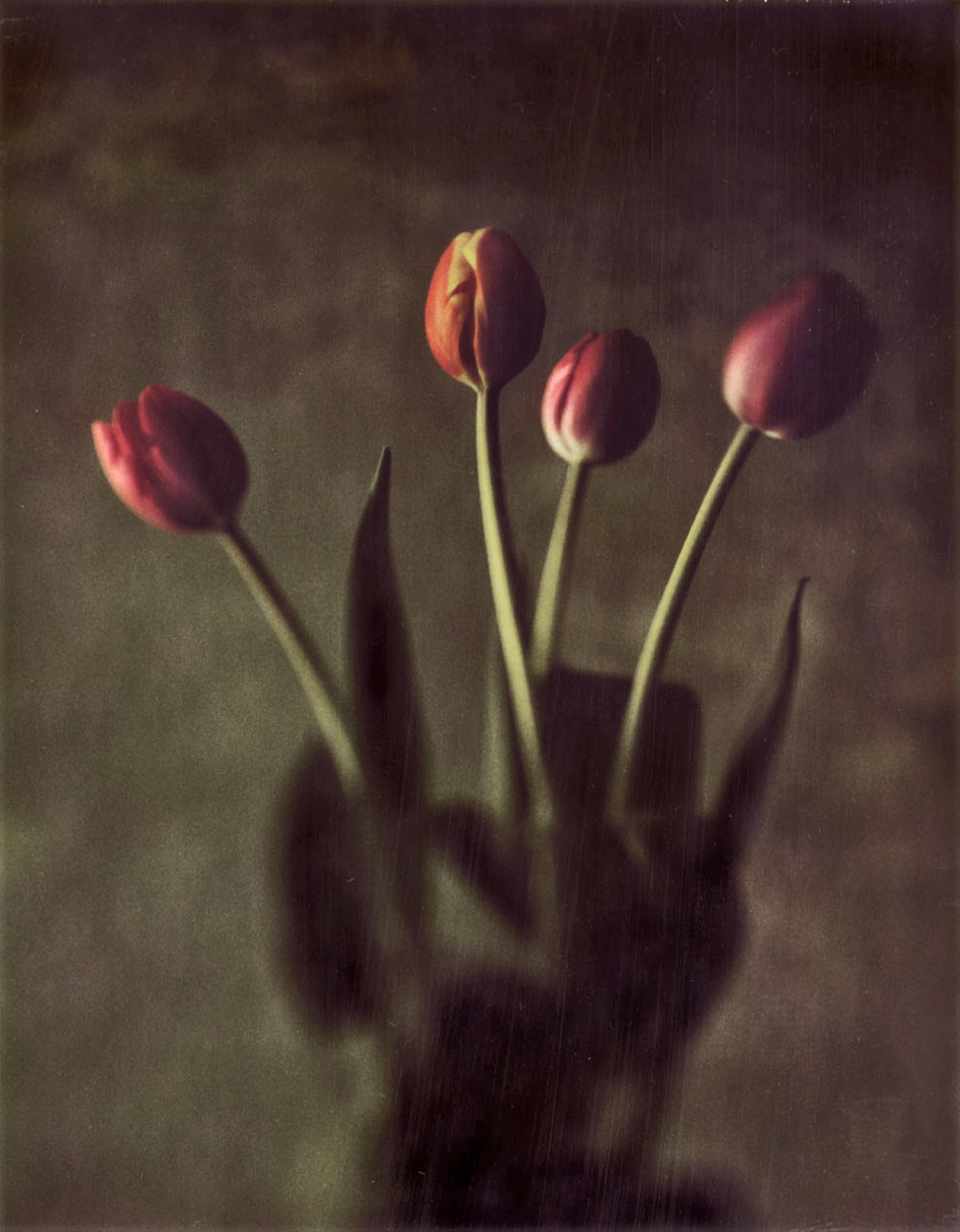 Tulips4.jpg