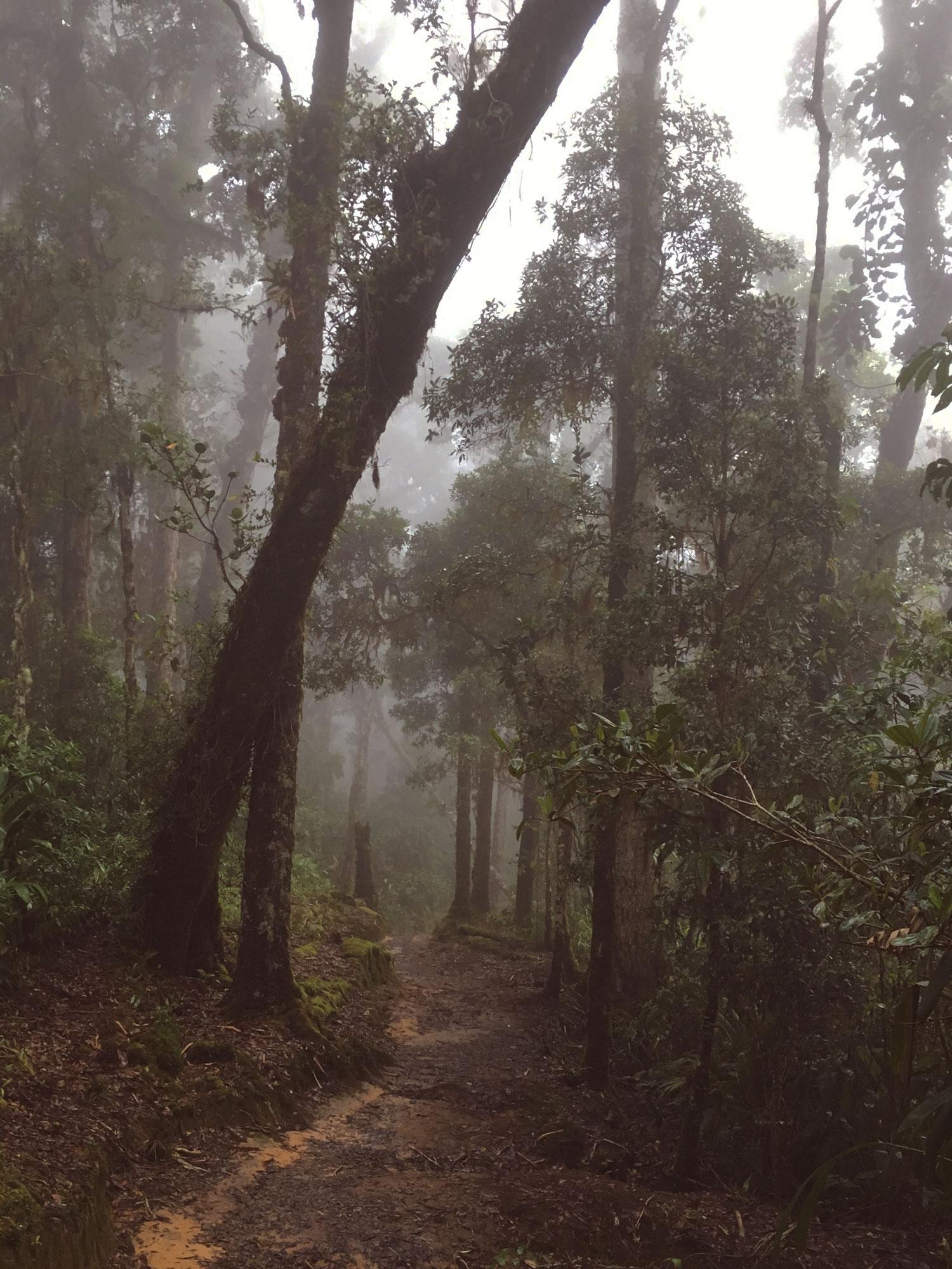 cerro-chiripo-costa-rica-wander-south-3.jpg