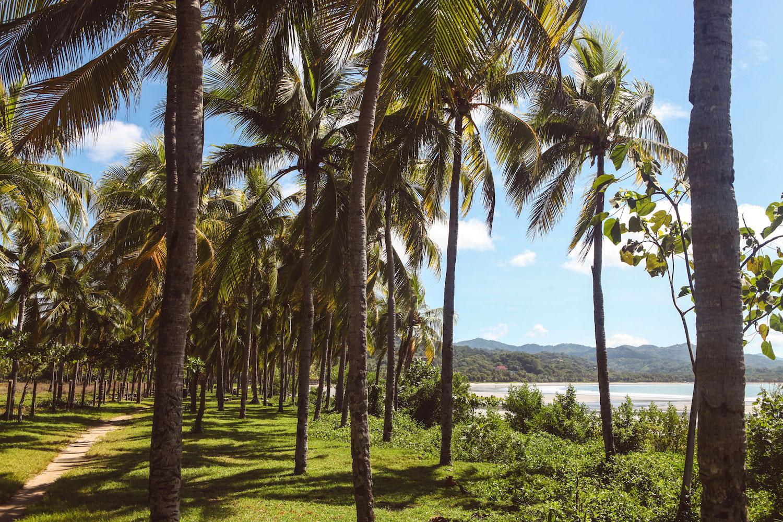 samara-costa-rica-wander-south-palms.jpg