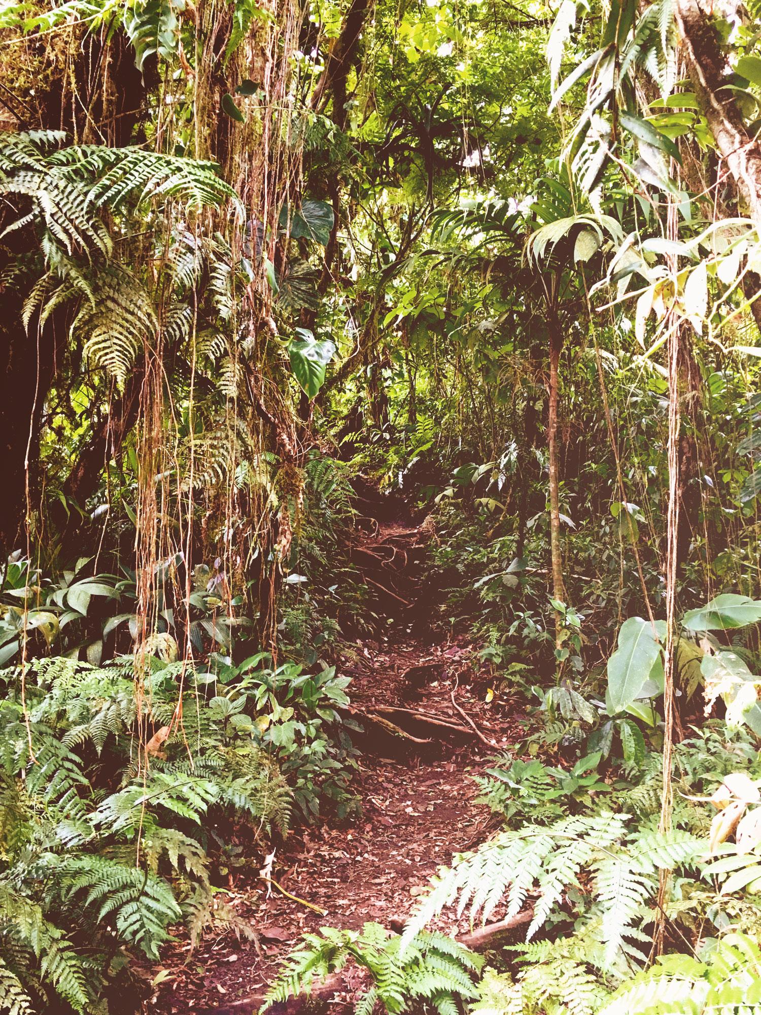 jungle-path.jpg