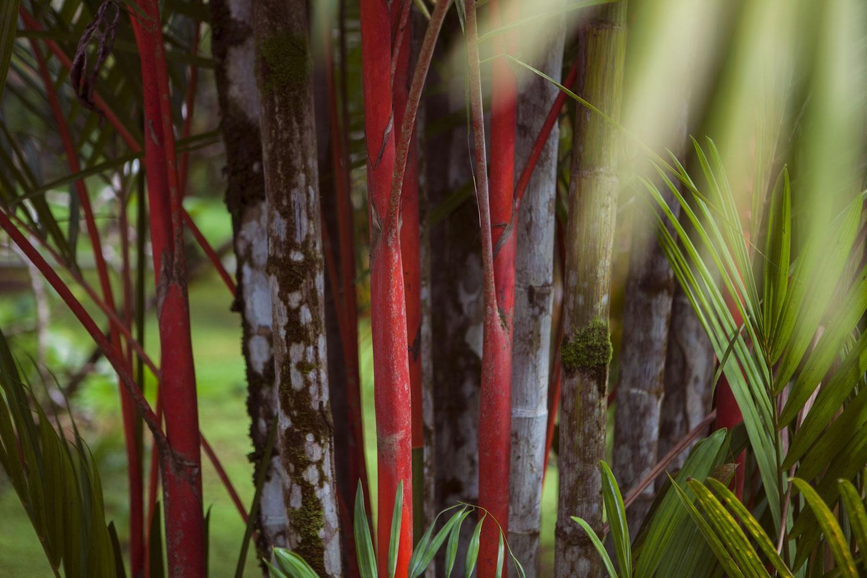pavones-costa-rica-wander-south-3.jpg