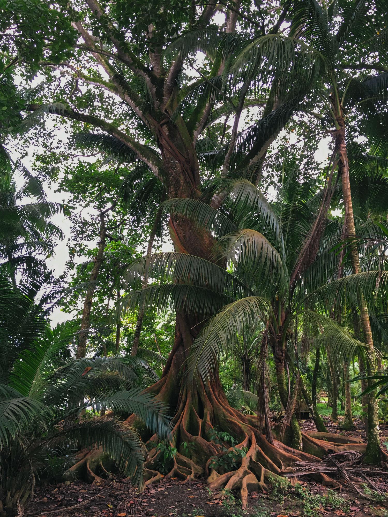 pavones-costa-rica-wander-south-tree.jpg