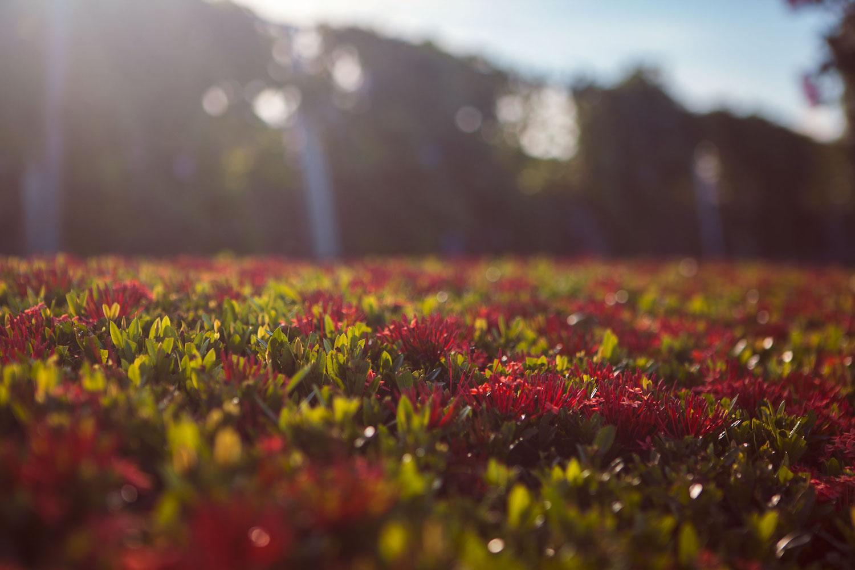 panama-city-wander-south-flowers.jpg
