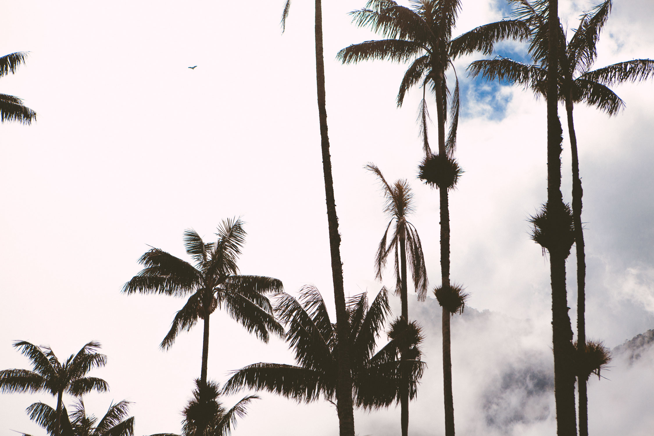 cocora-valley-colombia-wander-south-clouds-wax-palms-1.jpg