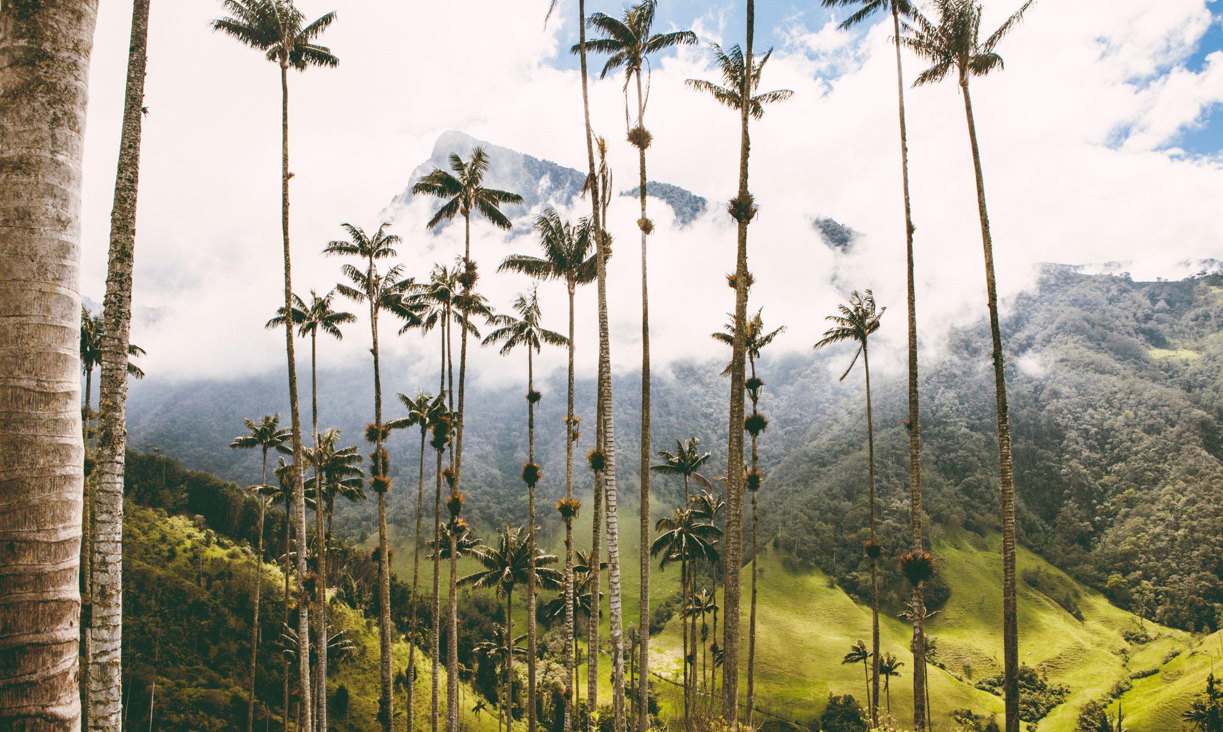cocora-valley-colombia-wander-south-peak-1.jpg