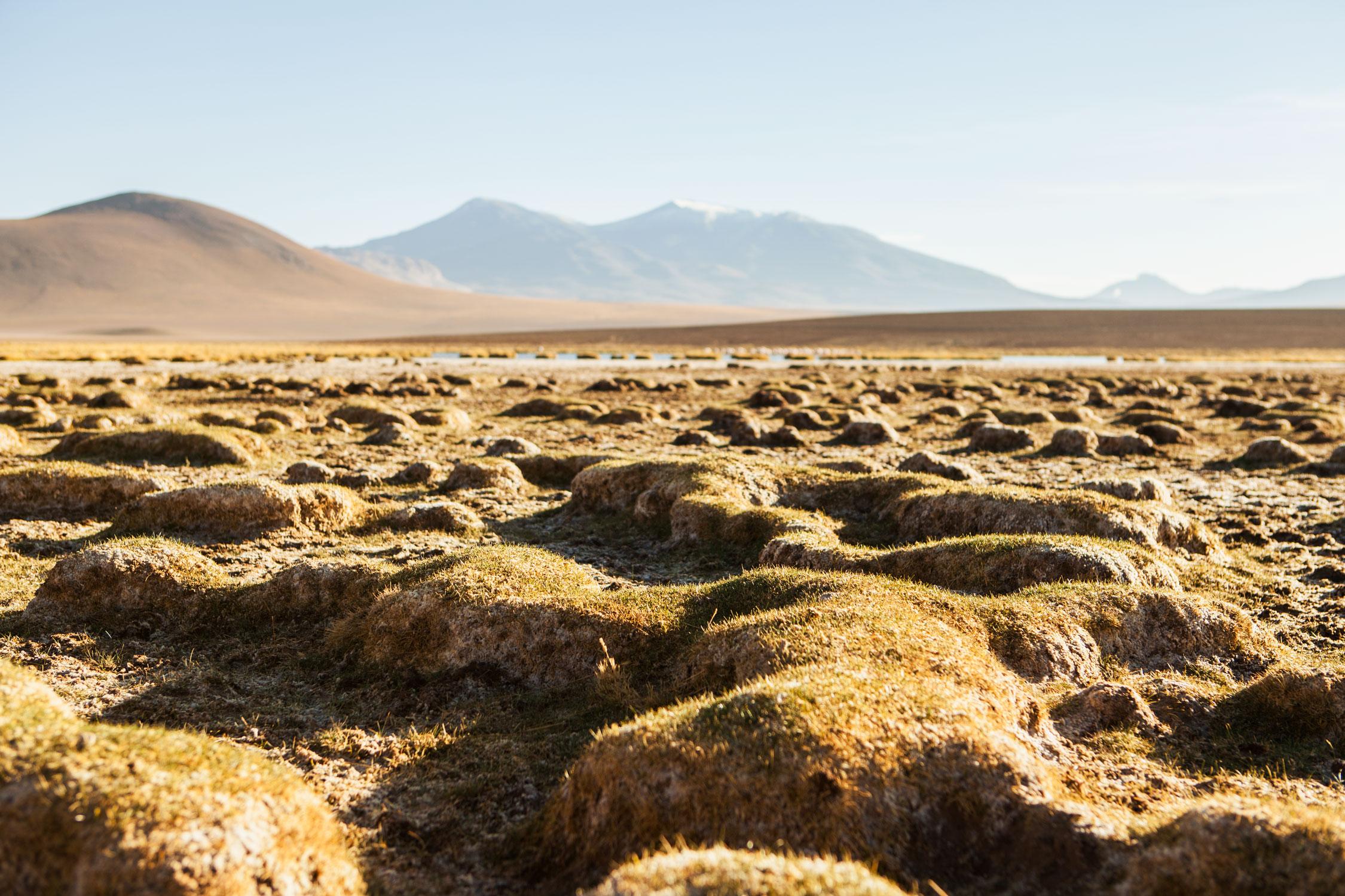 atacama-desert-chile-wander-south-random-3.jpg