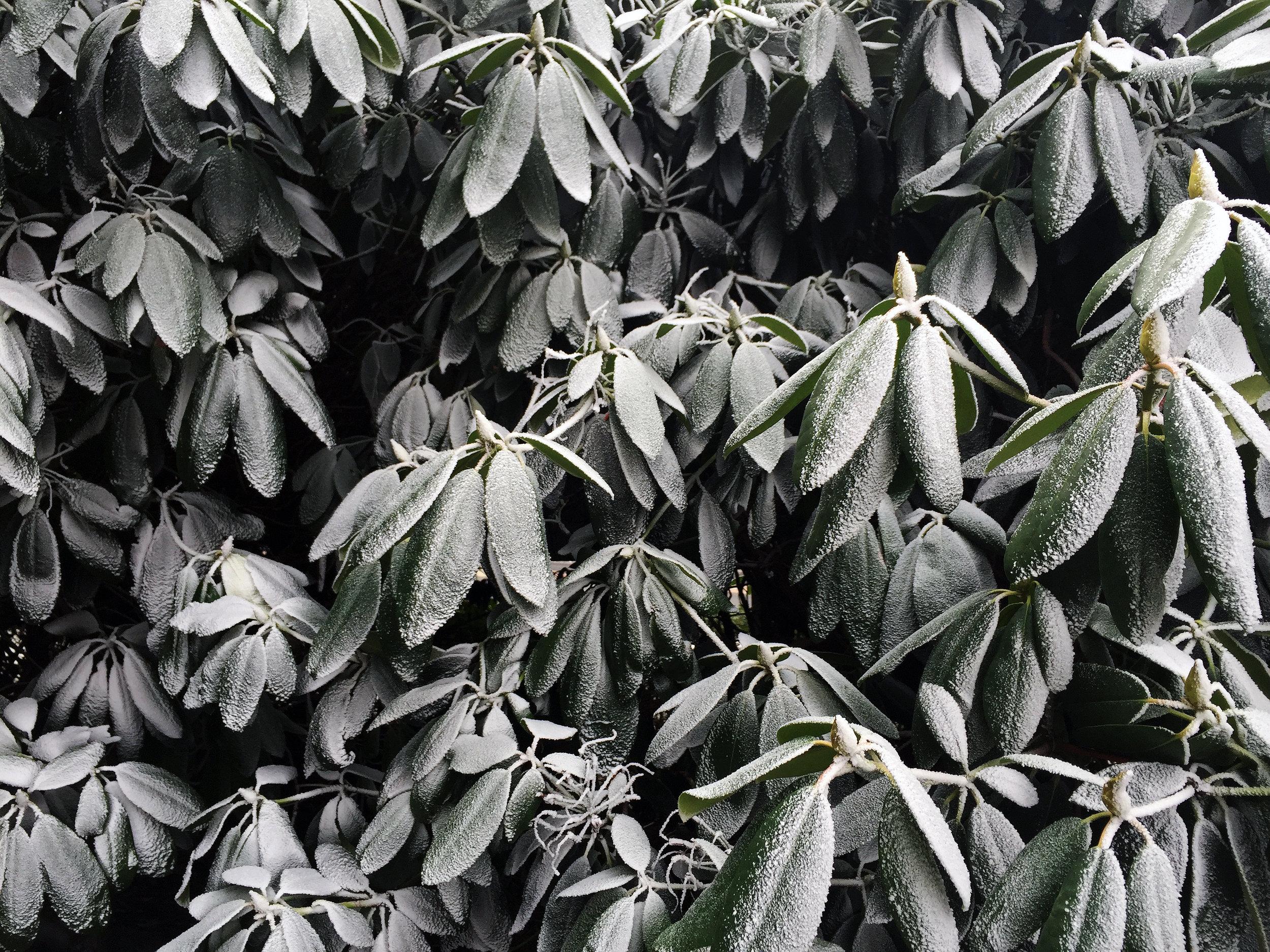 6.leaves copy.jpg