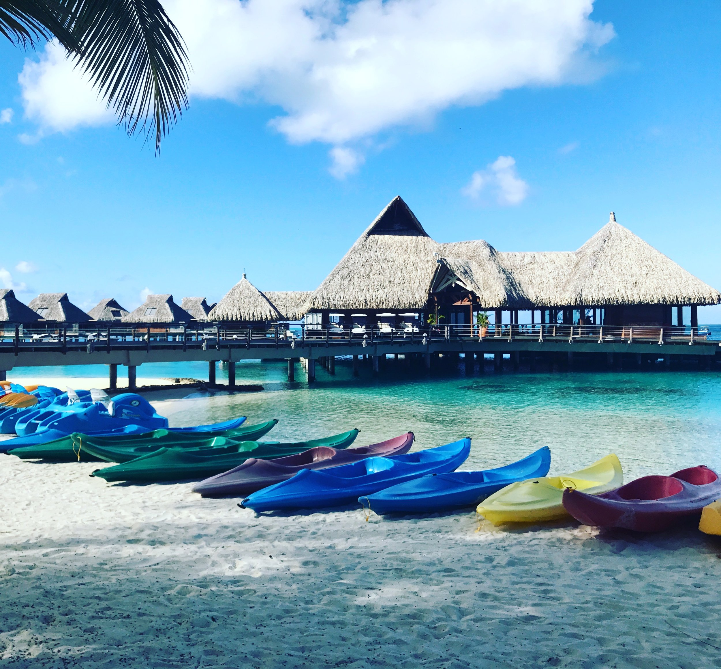 The bevy of color canoes you can choose from to paddle out and explore with