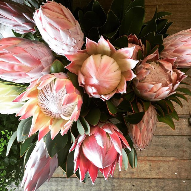 Happy grand final day!  We are open till 12 xxx  #perthflorist #florist #perth #kingprotea #flowershop #flowersinbloom #realflorists #gifts