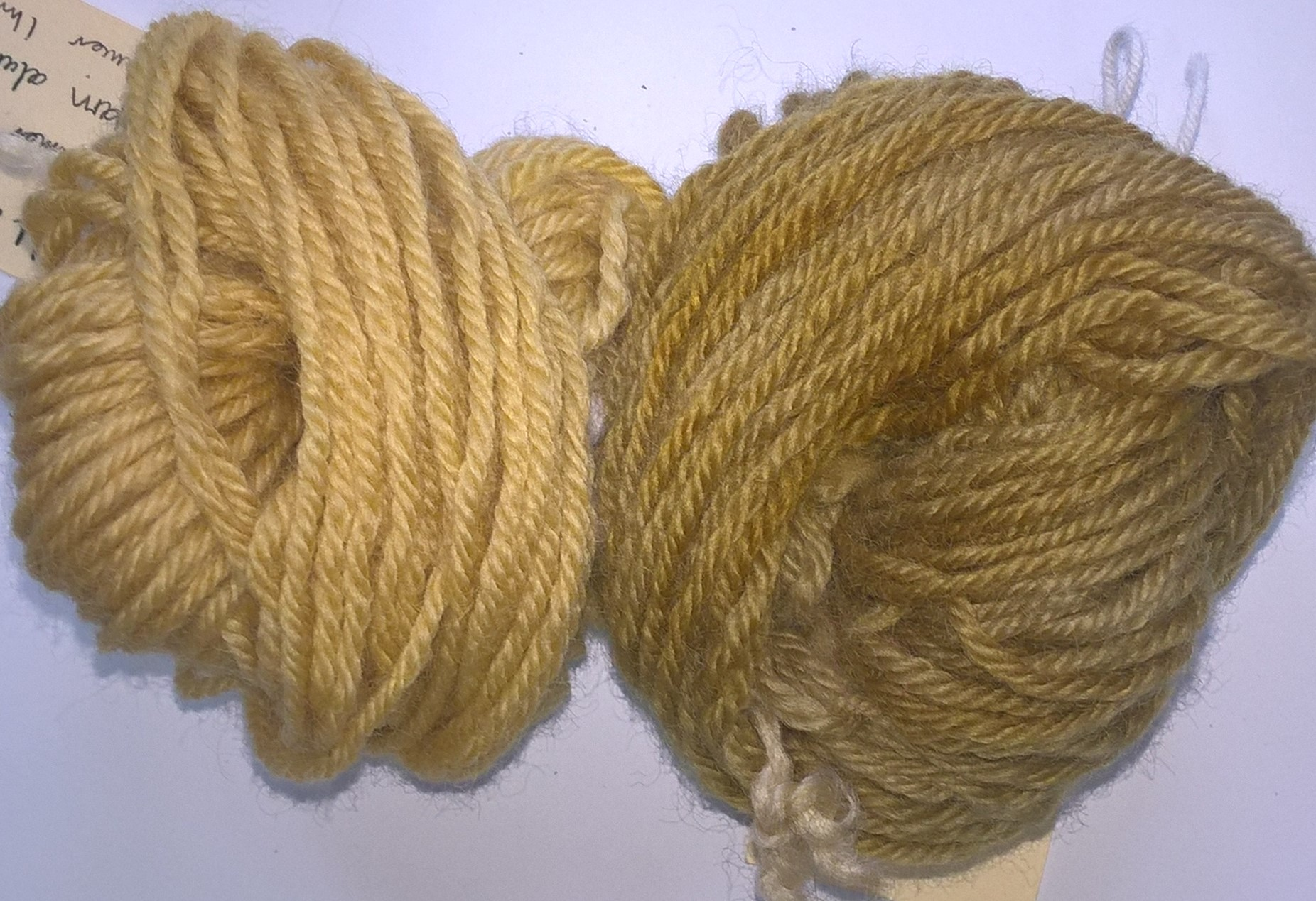 Yarn dyed with weld, without and with mordent