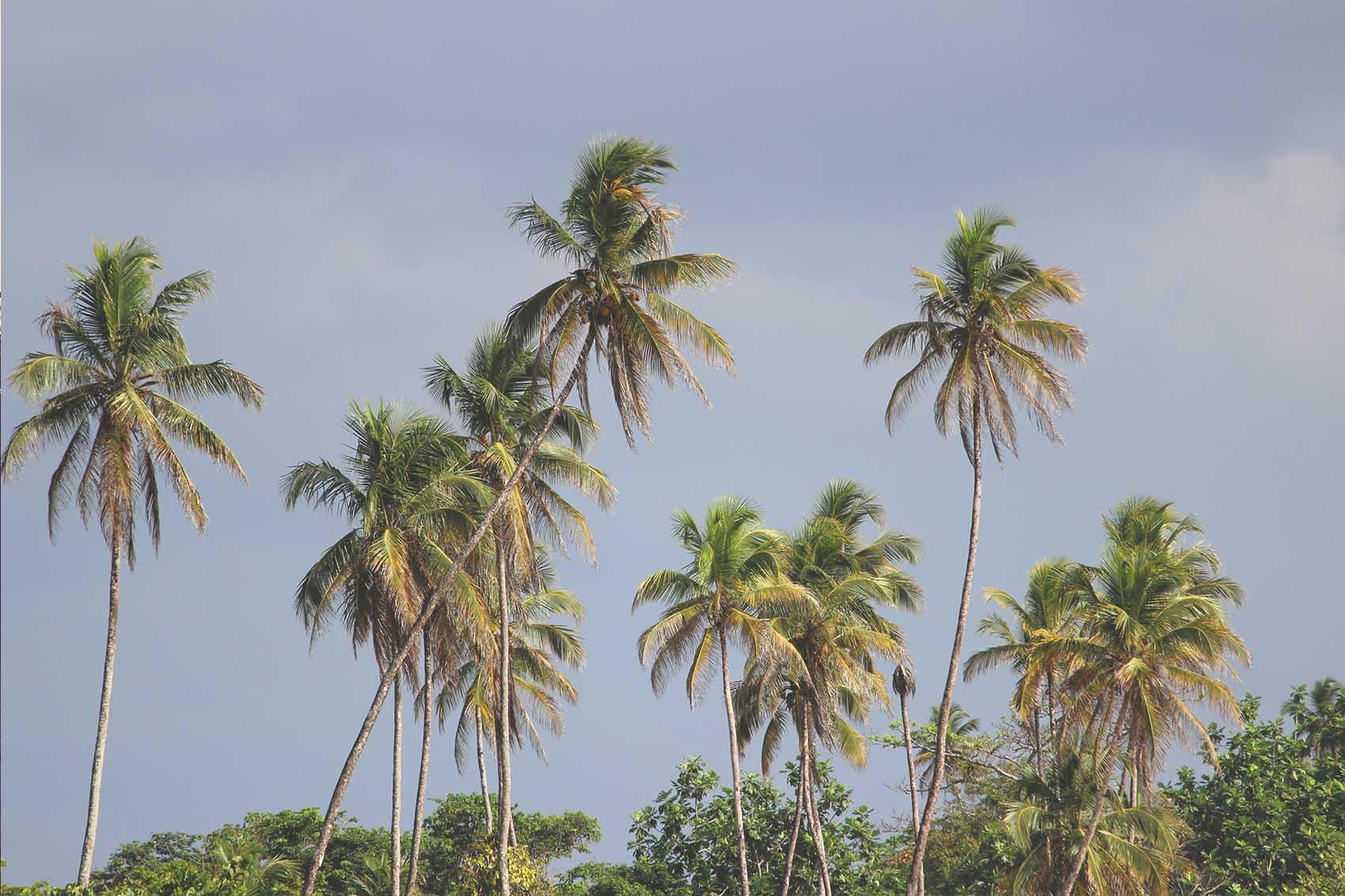 Bocas 30.jpg
