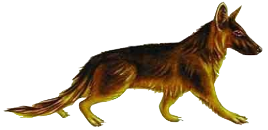 Tomarctus  (existed for around 7 million years)