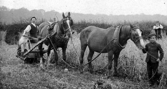 Old photograph of horses farm workers and reaper in North Fife, Scotland