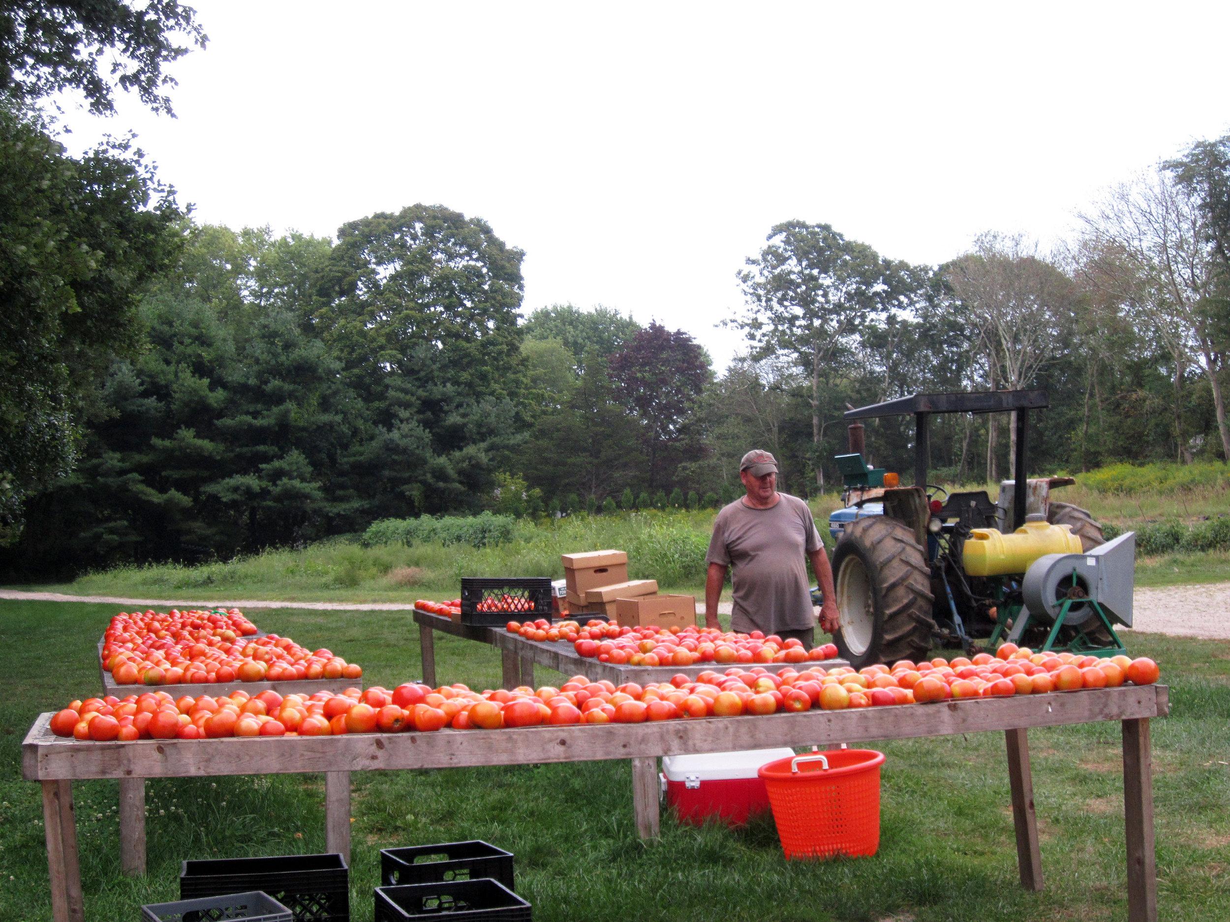 Tomato Racks & Farmer Gene Bessette.jpg