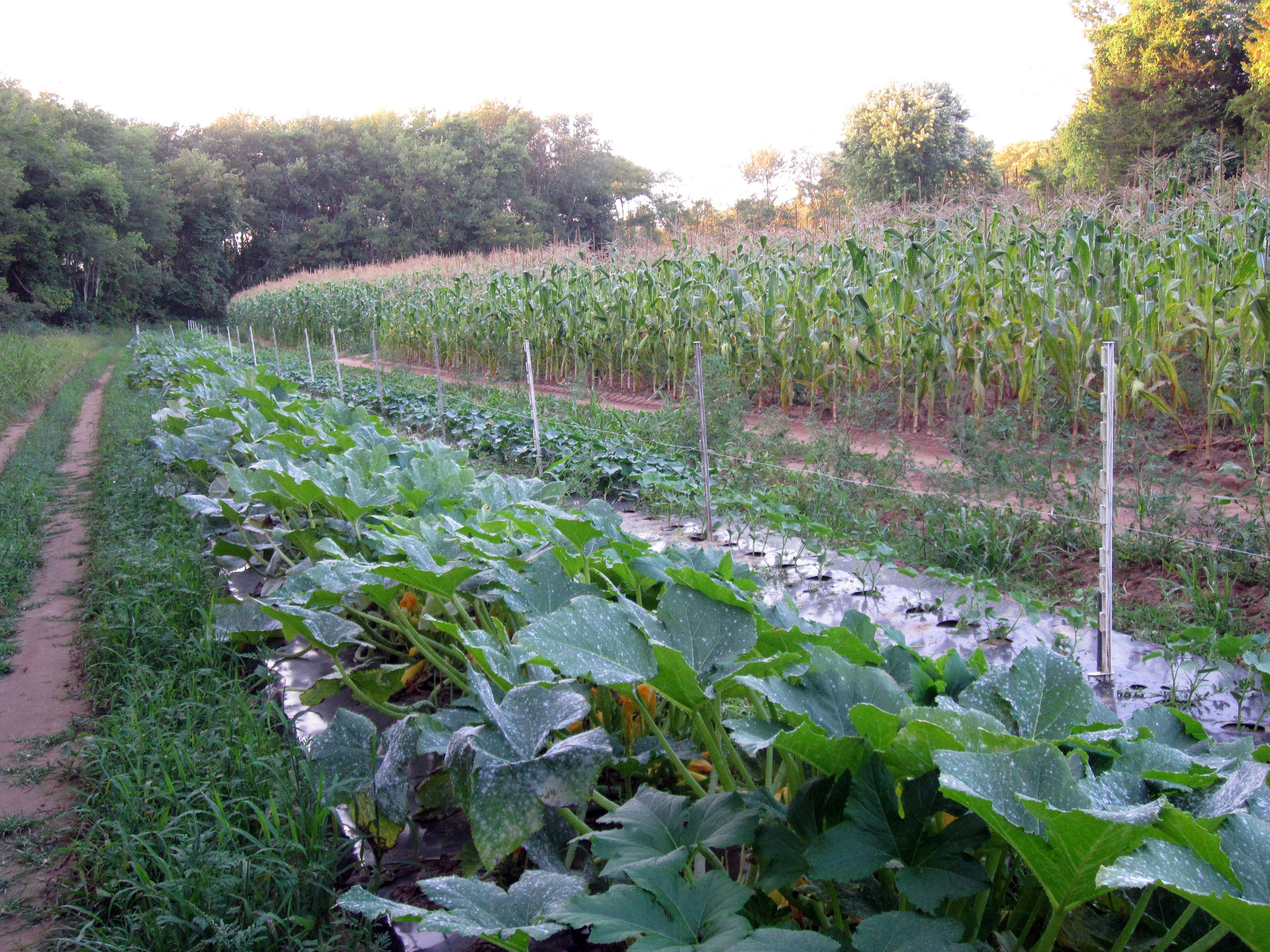 BESSETTES, FARMING on MEADOW WOODS, NEWLSETTER PHOTO 23.jpg
