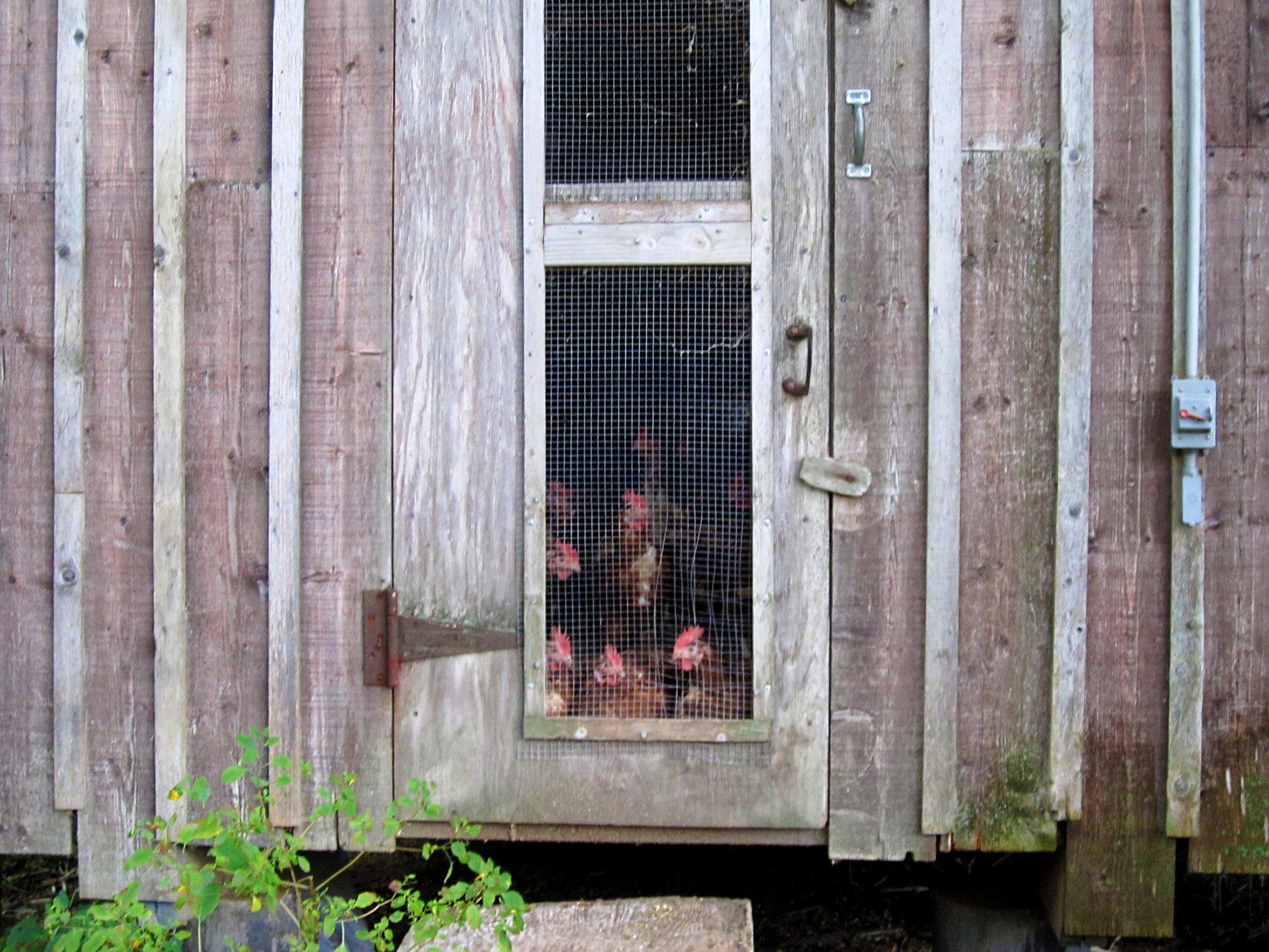 FARMER BESSETTE'S CHICKEN HOUSE, FARM-FRESH EGGS, TOO.jpg