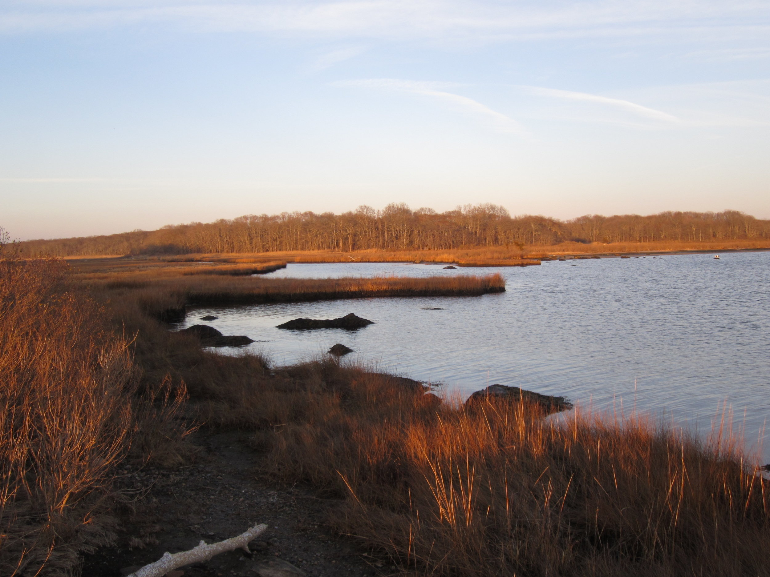 barn island tidal marsh photo: S. Simm