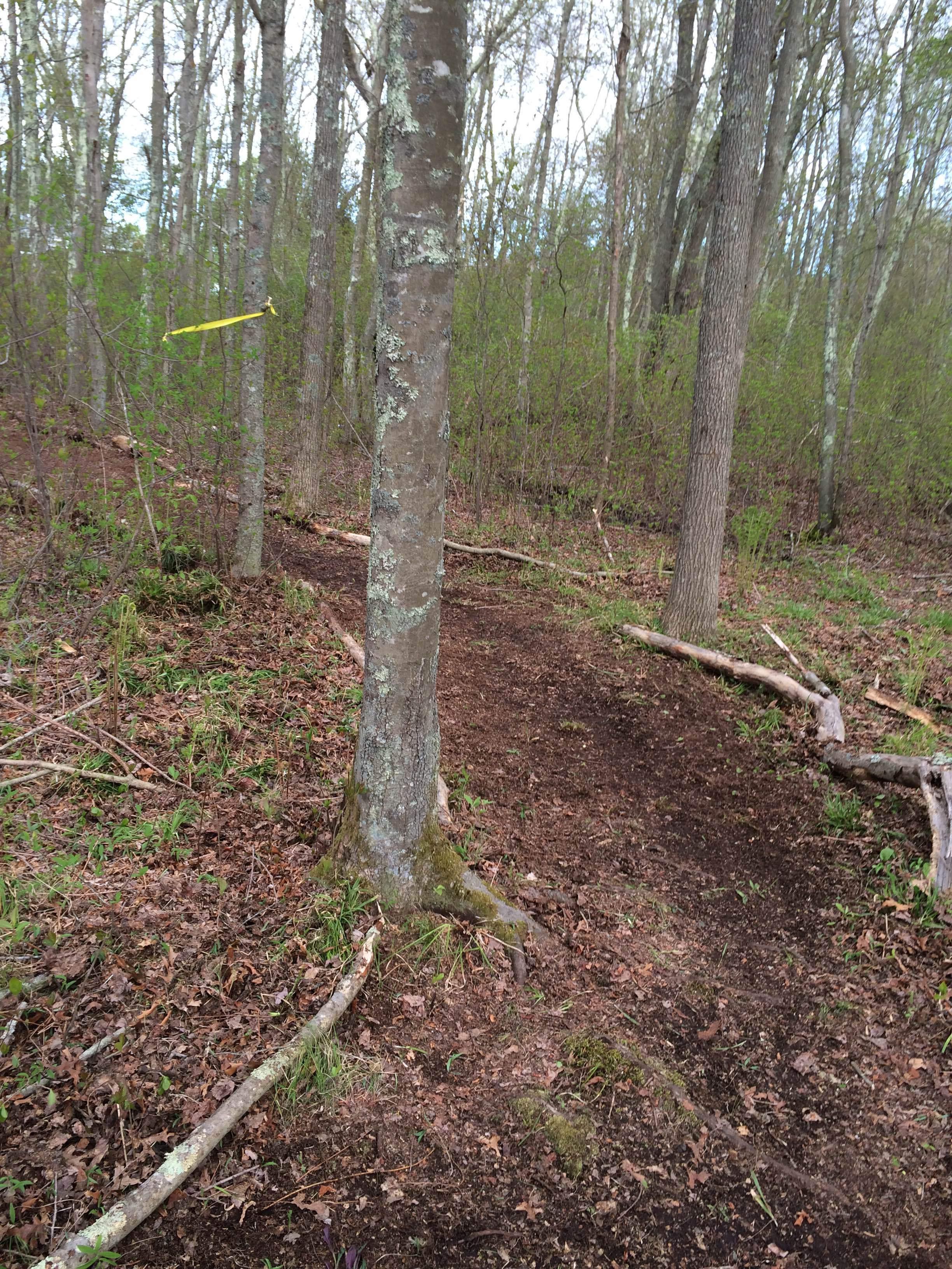 MEADOW WOODS, Trail Work with Alton Jones.JPG
