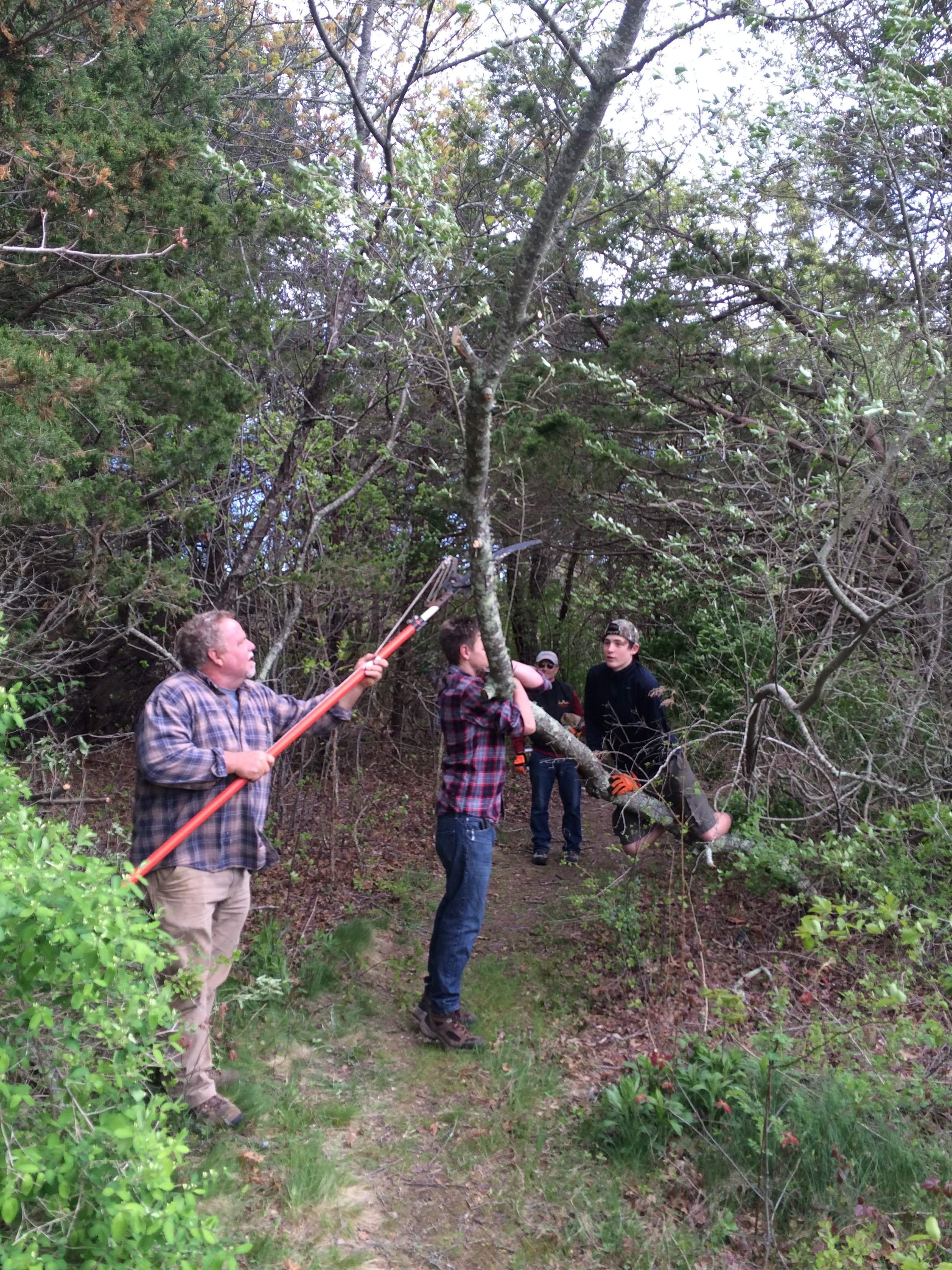 EAGLE PROJECT, ALTON JONES, No 1856, Large Branch Clearing, July 4, 2016.JPG
