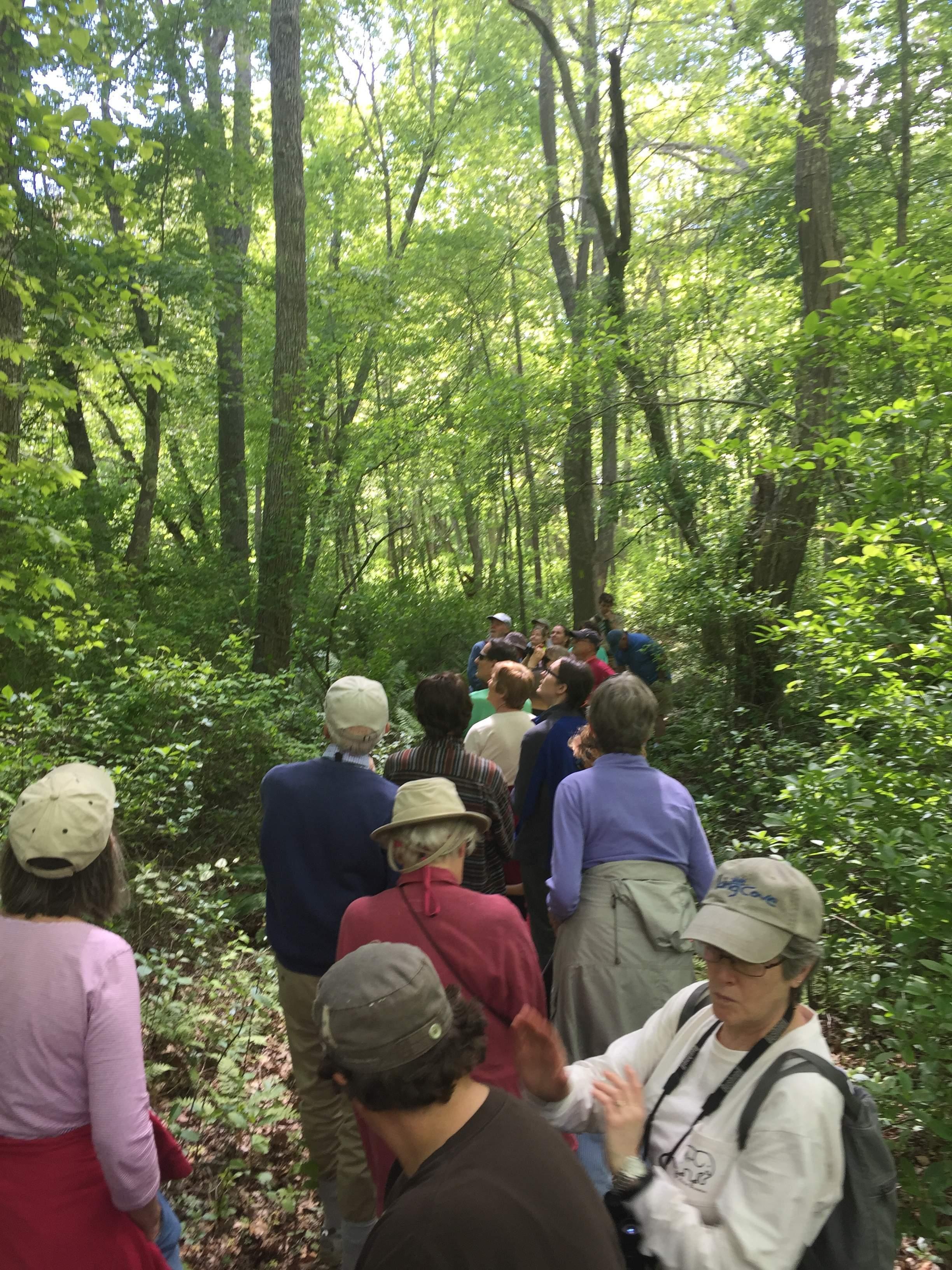 IMG_1061, NTD, Through Trail on Meadow Woods, 06-03-15.JPG