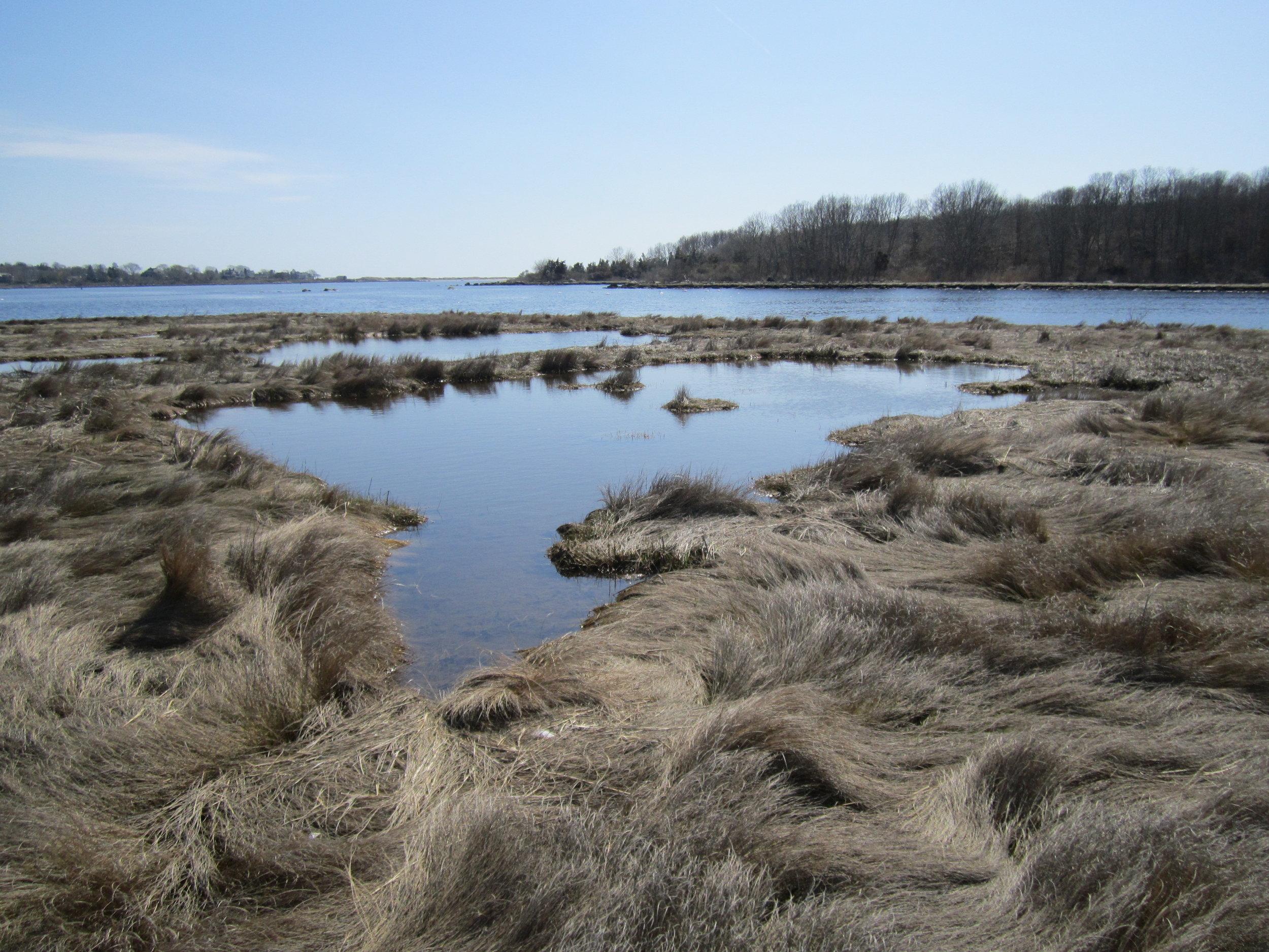 Tidal Pools on Davis Farm 4-27-13 (1).jpg