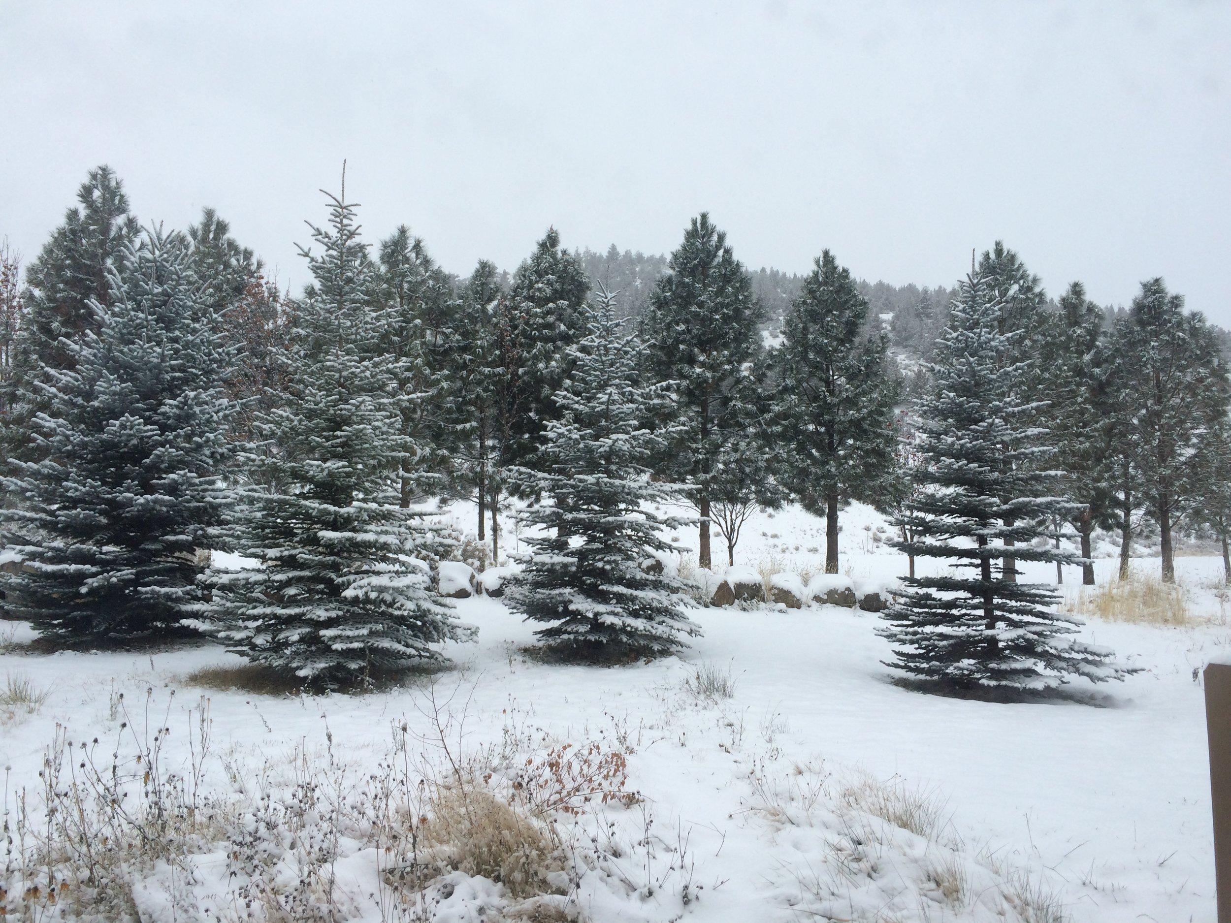 Photo Dec 06, 10 15 21 AM.jpg