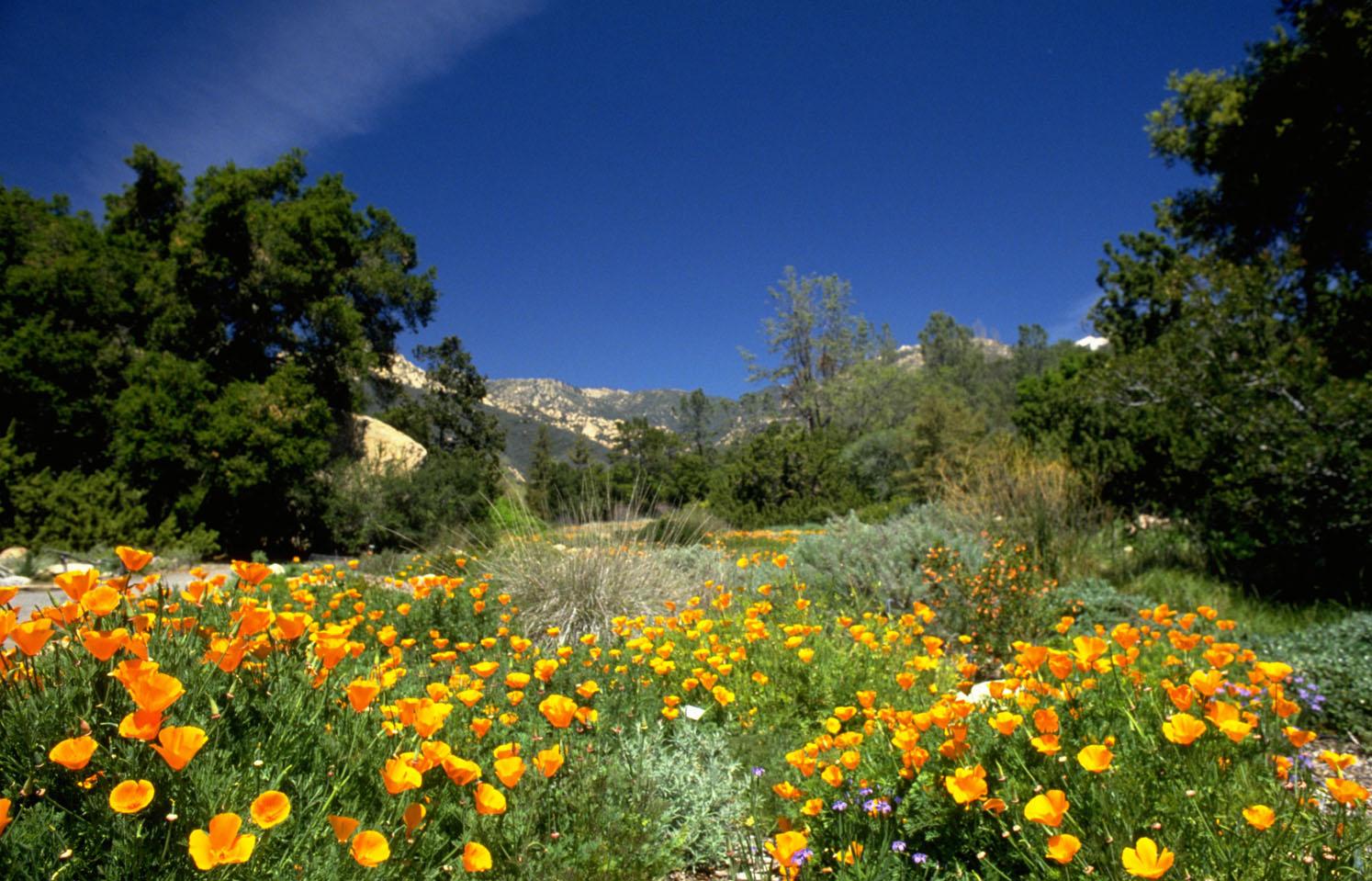 Pate_Botanic_Garden.jpg