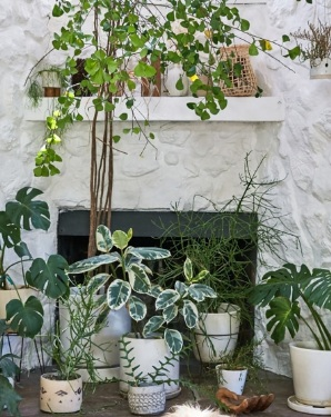 The Perfect Plants for Your Personality - Why not channel the seasonal greenery you see outside by investing in a few well-placed indoor plants? To help you decide which kind to buy, check out Domino's personalized recommendations right here.