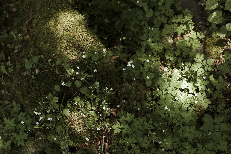 columbia-river-gorge-wahclella-falls-engagement-photos-greenery