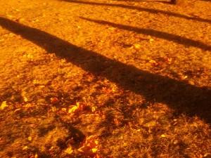 Shadows in light