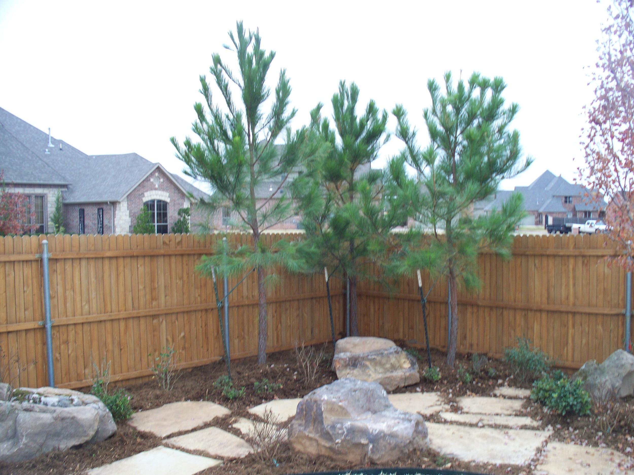 loblolly-pine_5421916430_o.jpg