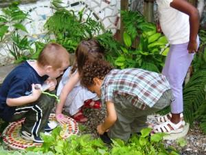 Exploring our back garden.