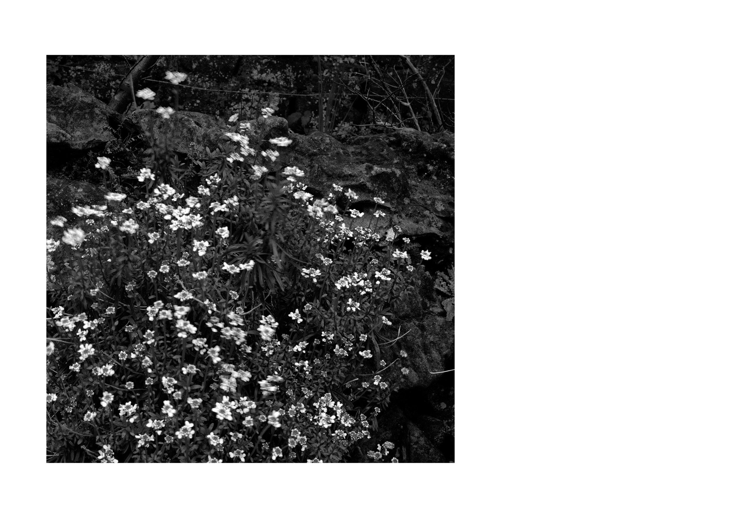 stillhere_book6_layout1.jpg