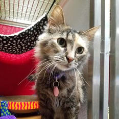 FAQ about FIV+ - Provided by Best Friends Animal Society