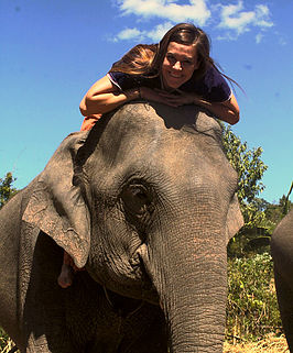 become a hill tribe elephant caregiver for a day.jpg